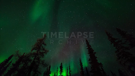 Time-lapse Northwest Territories: Aurora Evergreens