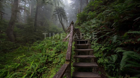 Time-Lapse Tofino: Rainforest Trail Steps