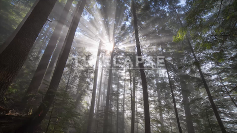 Time-Lapse Tofino: Rainforest Sun Rays 1