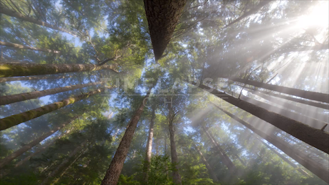 Time-Lapse Tofino: Rainforest Worm's-Eye View