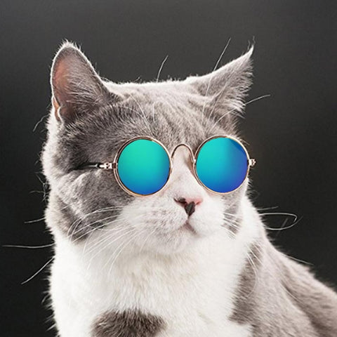 Cool Cat Eye-wear Pet Sunglasses Little Dog Glasses Cat Glasses Photos Props Dog cat Accessories Pet Supplies For Pet Product 10
