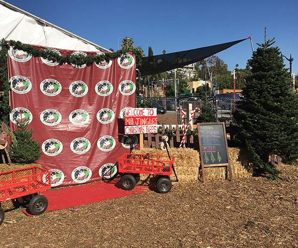 """If you want Mr. Jingles to pick out a beautiful tree for you and have it  delivered please go to the order online tab to place your order!"""" - Best Christmas Trees In Town- Mr. Jingles Christmas Trees"""