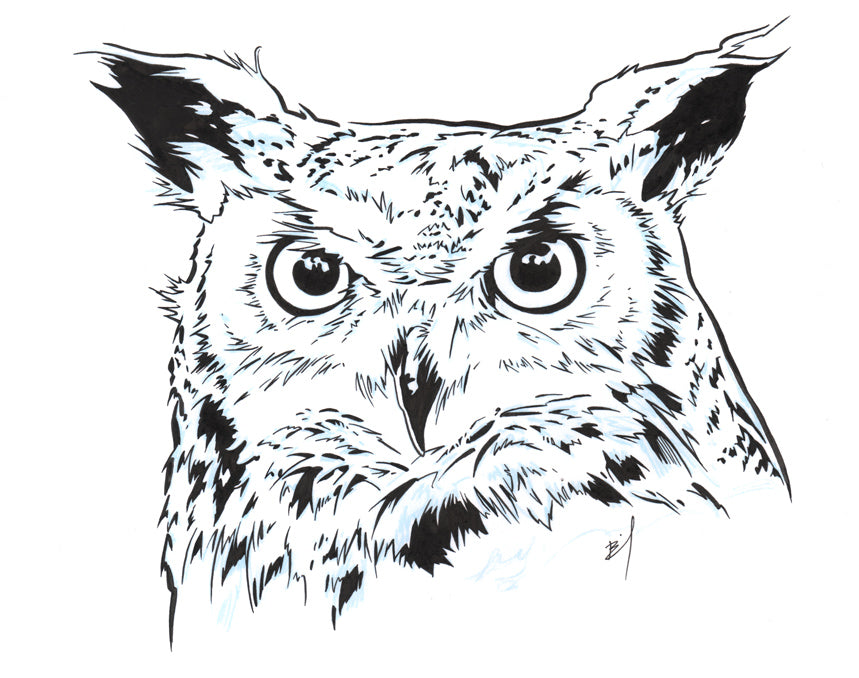 Ink drawing of an owl