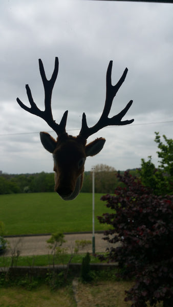 Deer in office window
