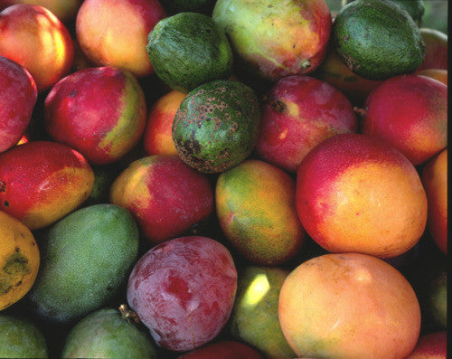 Mangoes: Not Just For Eating!