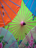 Chinese Umbrella Photo
