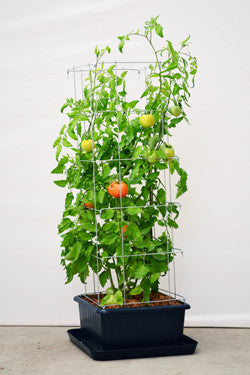 Veggie Towers