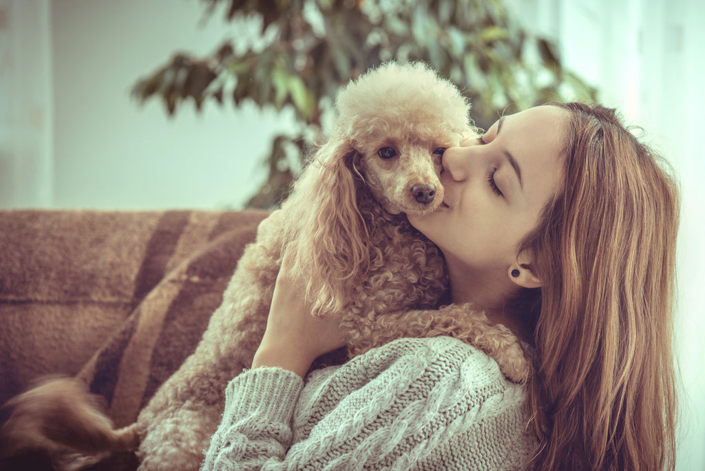 Great Strategies on How to Combat Your Pet's Bad Breath