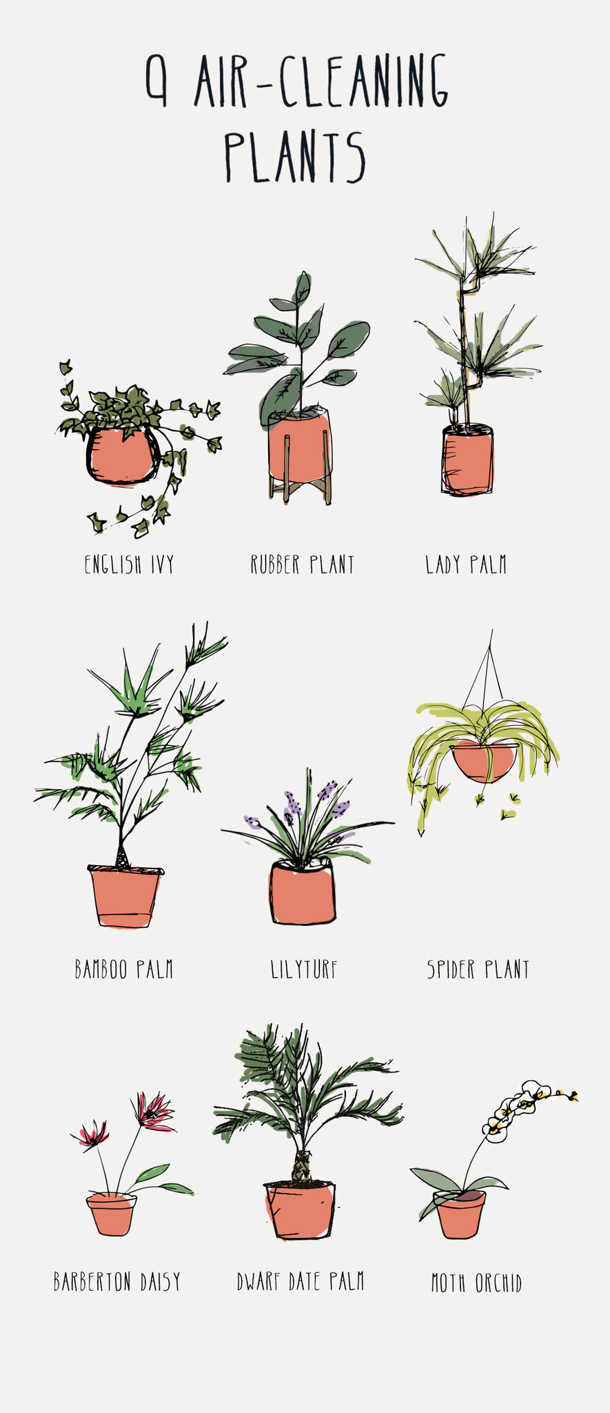 Best Air-Cleaning Plants