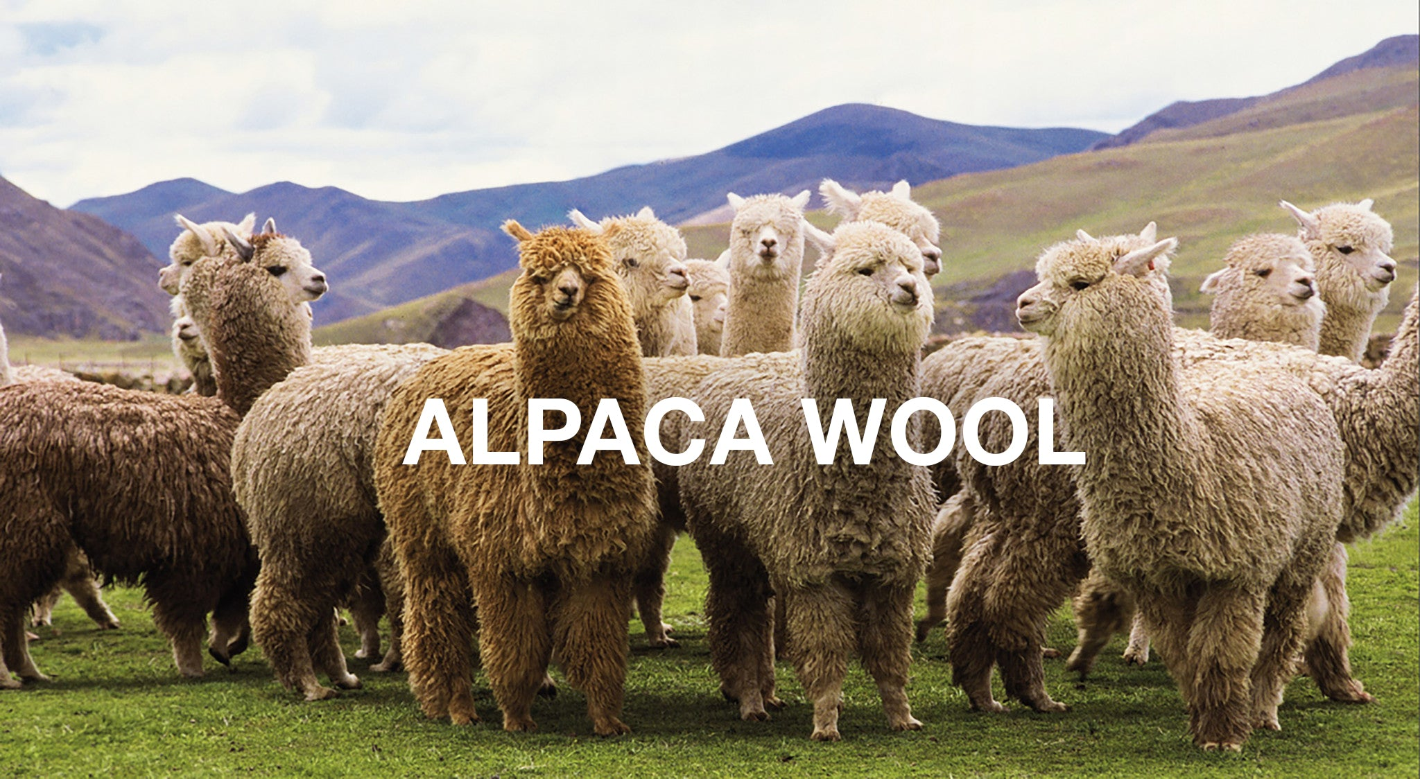 Sustainable Fiber Alpaca Wool Noble Carriage