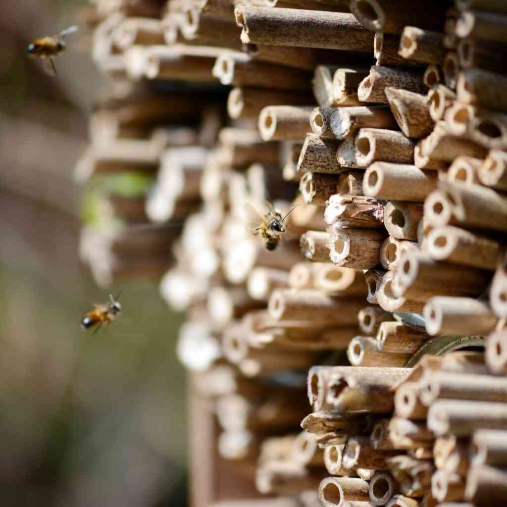 bee garden ideas