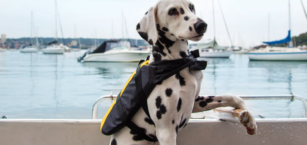 How To: Fasten Your Dog's Lifejacket
