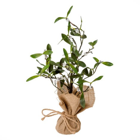 Mistletoe In Burlap Pot