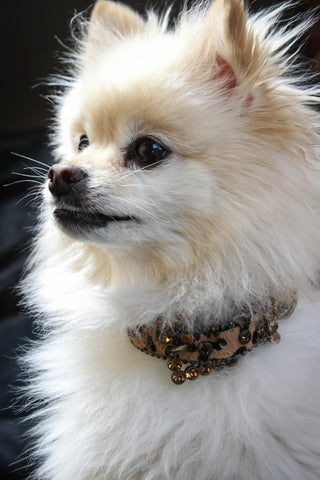 Brown Animal Print Rhinestone Dog Collar