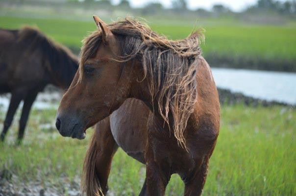 Charity of the Month: Foundation for Shackleford Horses