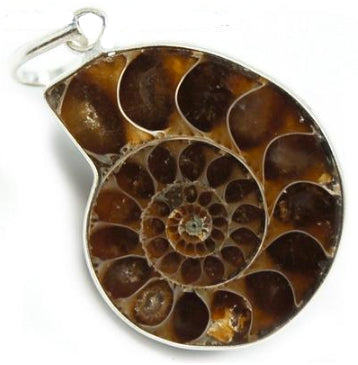 Everything_soulful_ammonite_pendant