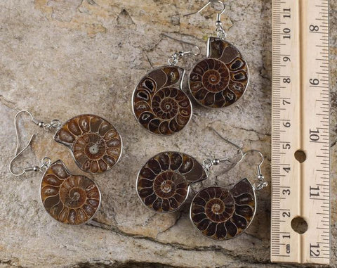 everything_soulful_ammonite-fossil-earrings