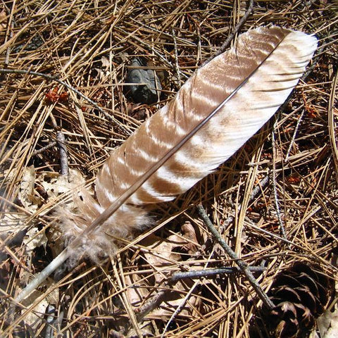 everything_soulful_smudge_feather