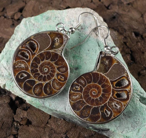 Ammonite: Change and Evolution Earrings