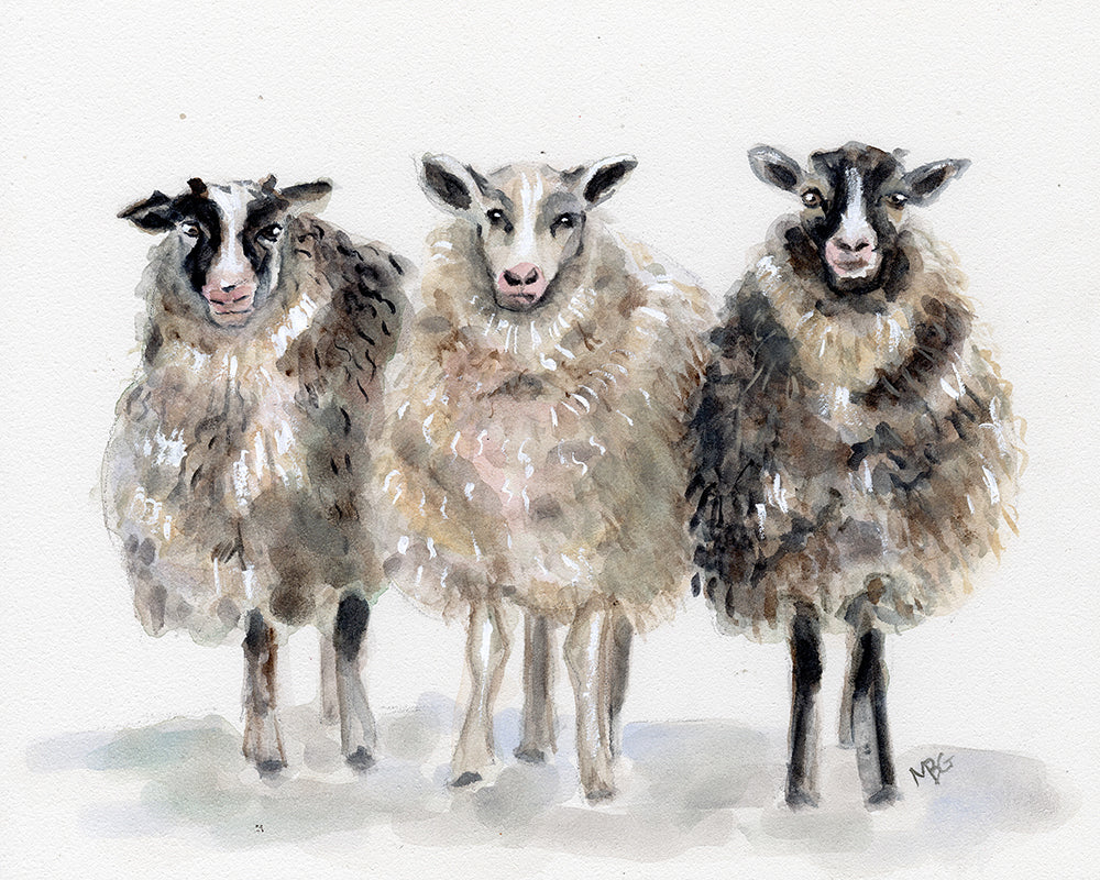 Watercolor 3 Sheep