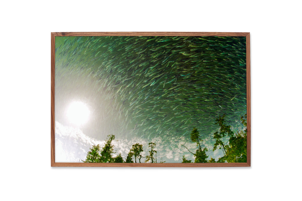LIMITED EDITION - PILCHARDS OVER THE MOON - 25/100 - 24x36 INCHES