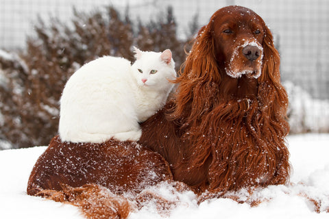 a pet cat and dog in the snow