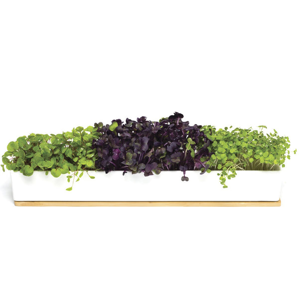 Microgreens Window Box Kit