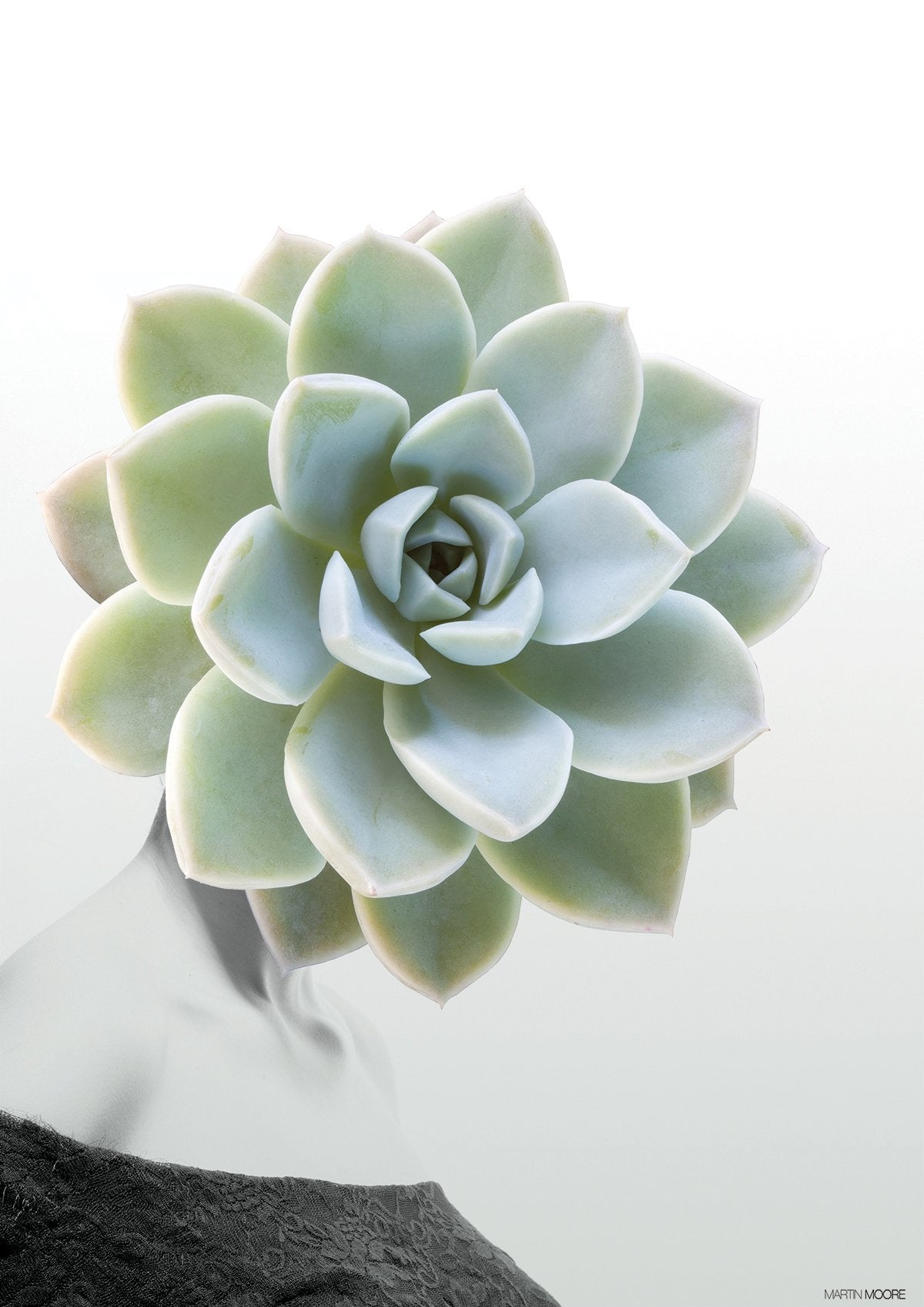 Succulent #1 - By Martin Moore