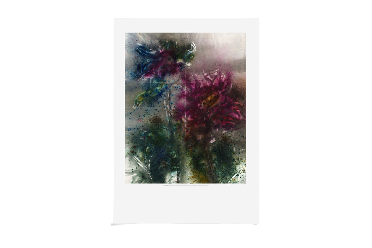 A2 Poster Transience II Peony