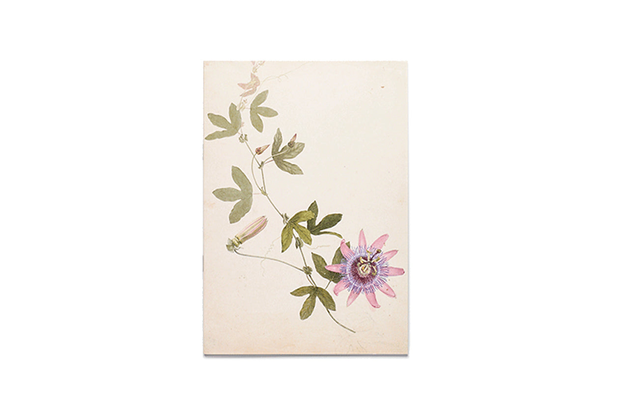 Notebook A trail of passion flowers c. 1860