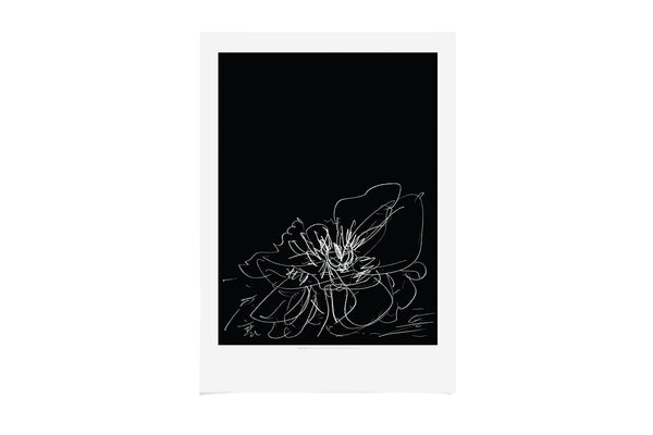 A2 Poster Study for Transience II Peony 2019