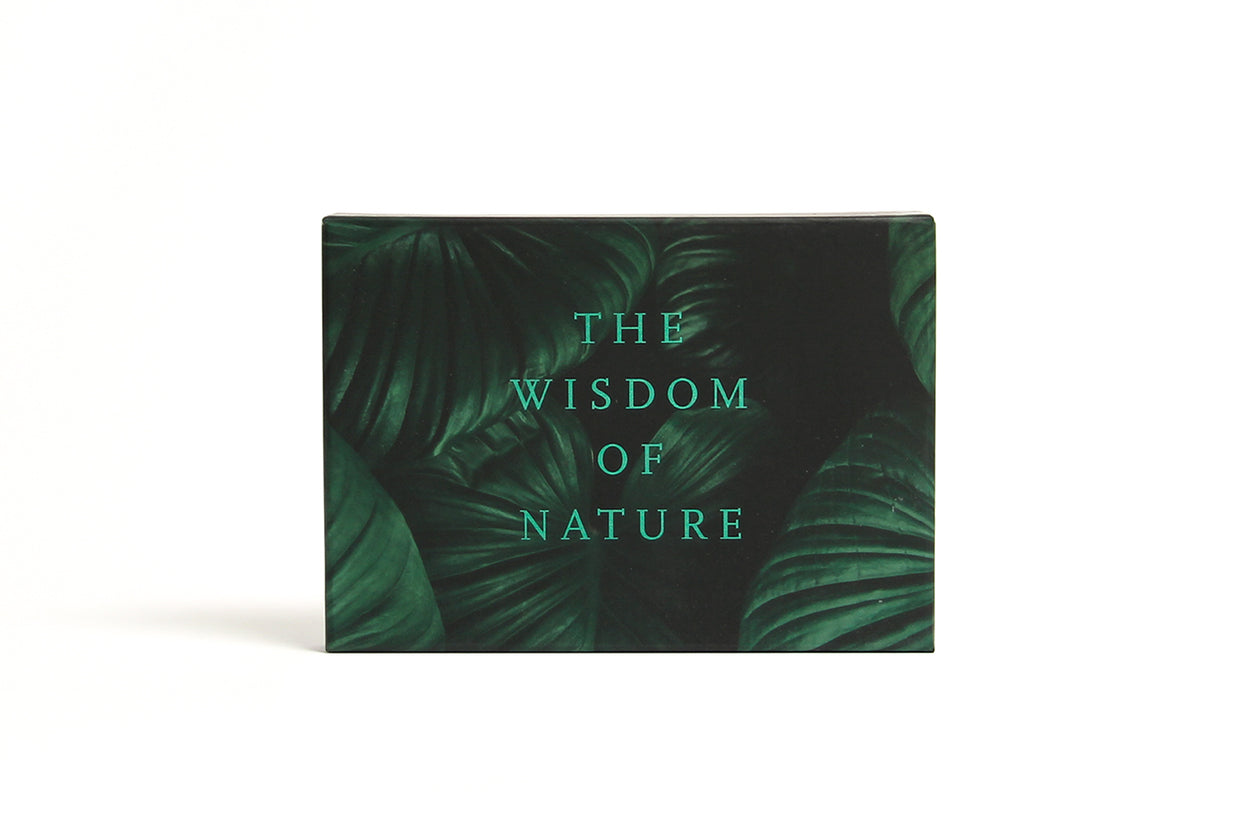 The School of Life Card Set Wisdom of Nature