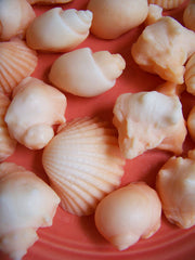 Orange Sea Shell Soap Set