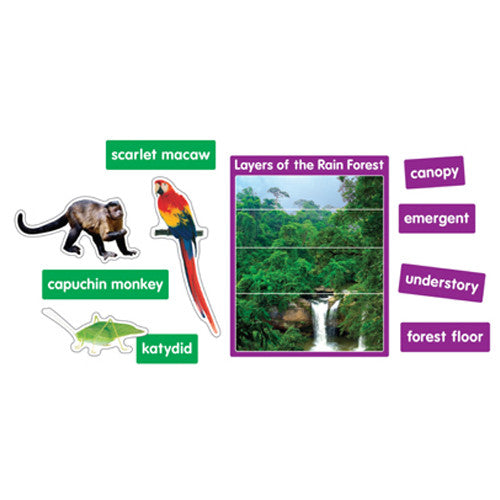 Rain Forest Animals Bulletin Board Set