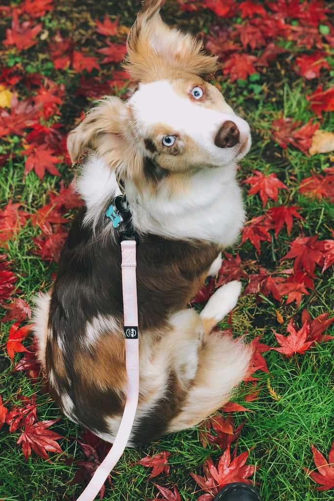 Wander Forever Dog Leash