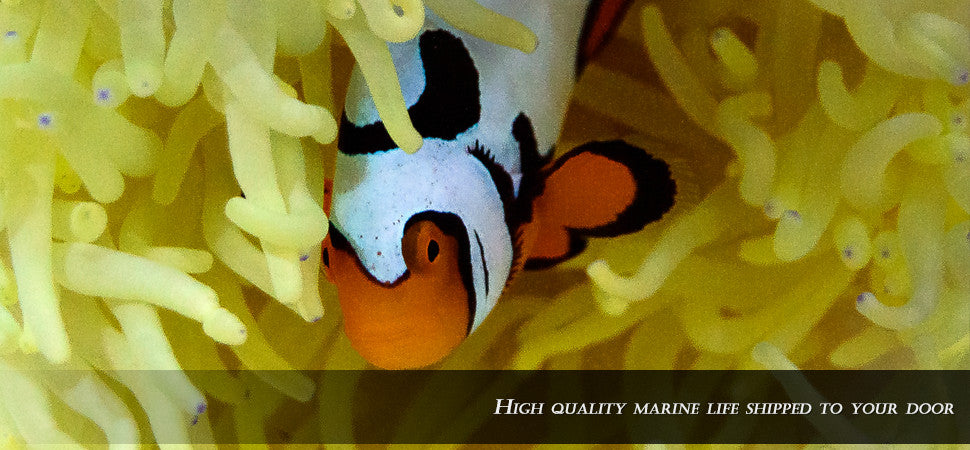 High quality marine life shipped to your door.