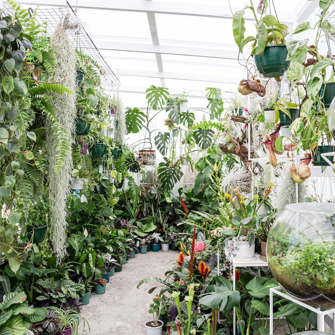 Finding Inspiration in the Plant Shops of Australia