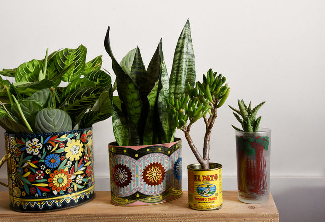 Tired of Terra Cotta? Take Your Plants Thrifting, A Guide