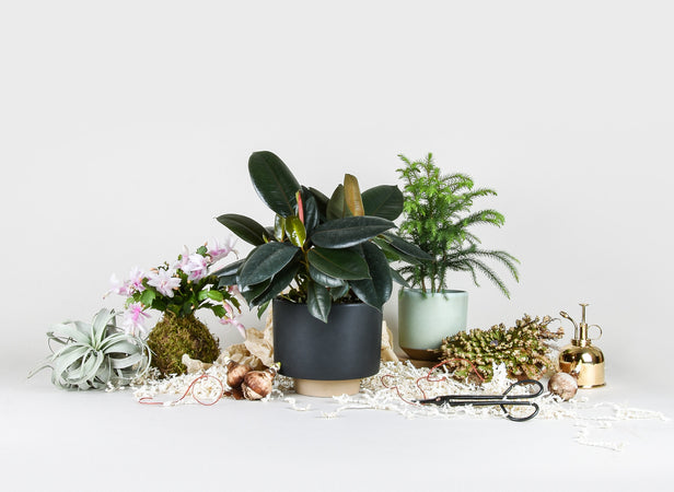 12 Days of Plant Love: A Holiday Houseplant Gift Guide