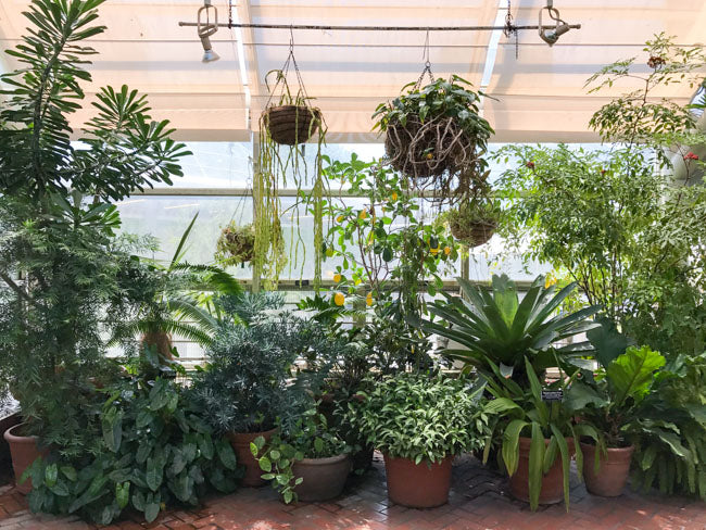 Photo Diary: Greenhouse Visit to Brooklyn Botanic Garden Conservatory