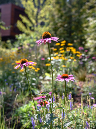 Drought Tolerant Plants: Our 15 Favorites for Late Summer Gardens