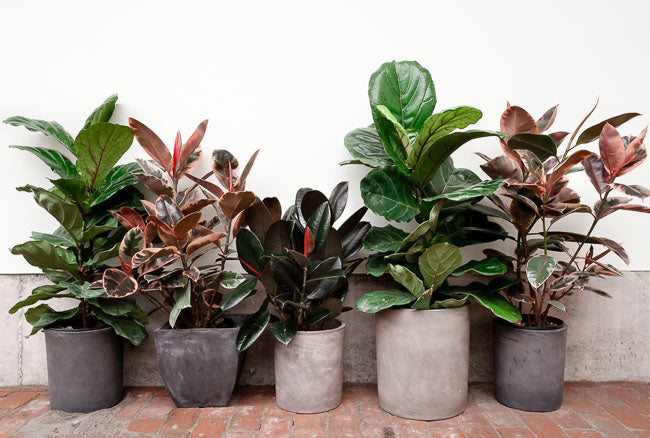 Spring Indoor Plant Care: 5 Steps to Happier Houseplants