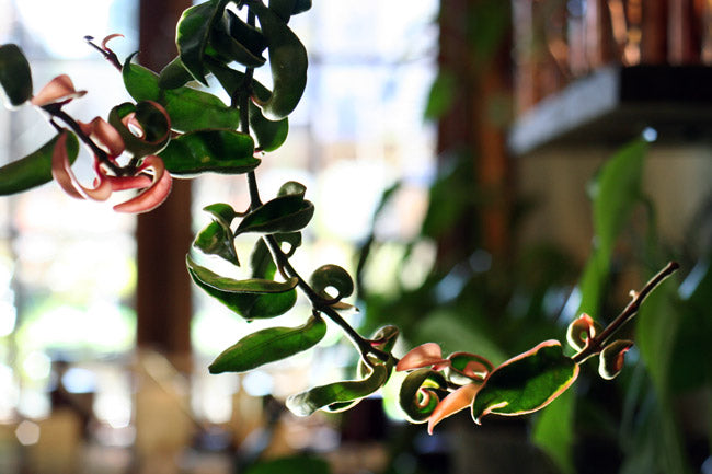 Five Reasons You Need Indoor Plants: The Many Benefits of Houseplants