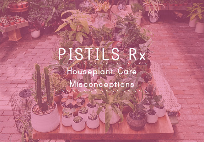 Pistils Rx: Common Houseplant Care Misconceptions