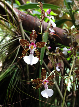 5 Things You Didn't Know About Epiphytes: A Visit to Orchídeas Moxvinquil