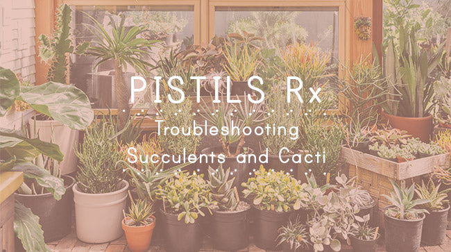 Pistils Rx: Troubleshooting Succulents and Cacti