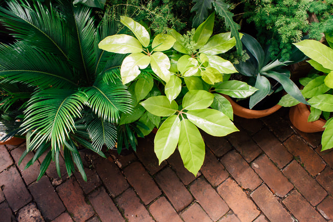 Summer Plant Care: 8 Tips to Survive a Heat Wave