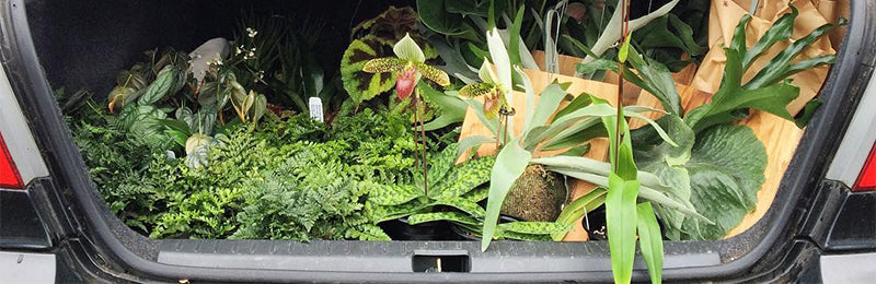 Traveling with Houseplants: A Guide to Moving Plants by Car, Plane and Mail