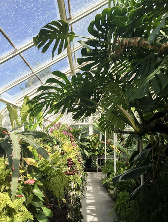 Volunteer Park Conservatory: Seattle's Tropical Plant Paradise