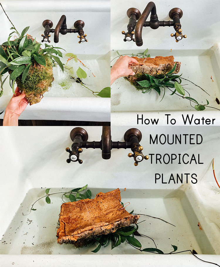 How To Water Mounted Tropical Plants
